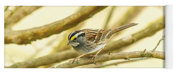 White Throated Sparrow Yoga Mat