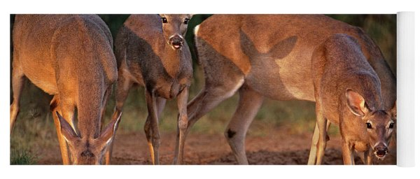 Whitetail Deer At Waterhole Texas Yoga Mat