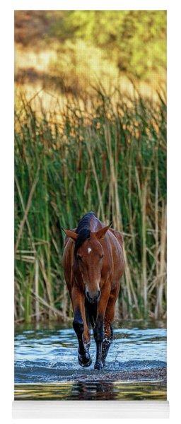 Wild Horse Walking Forward In Salt River Yoga Mat