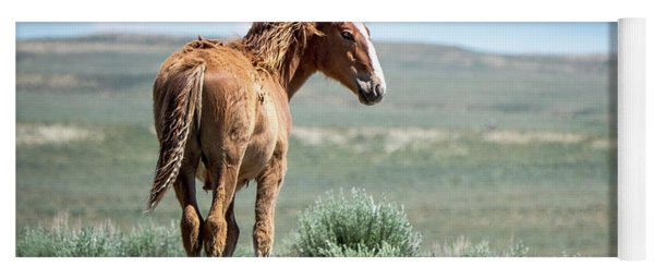 Yoga Mat featuring the photograph Wild Mustang Colt Of Sand Wash Basin by Nadja Rider