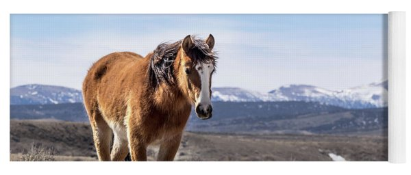Yoga Mat featuring the photograph Wild Mustang Filly Of Sand Wash Basin by Nadja Rider
