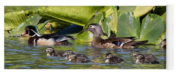 Wild Wood Duck Family Outing Yoga Mat
