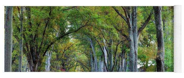 Willow Oak Trees Yoga Mat