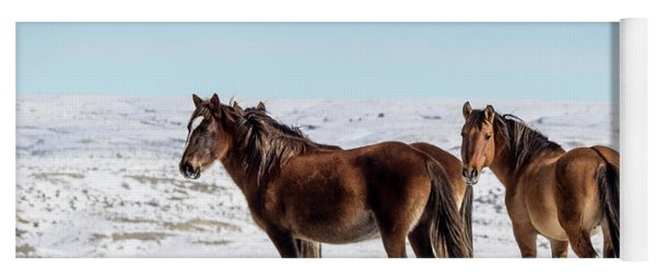 Winter In Sand Wash Basin - Wild Mustangs Yoga Mat