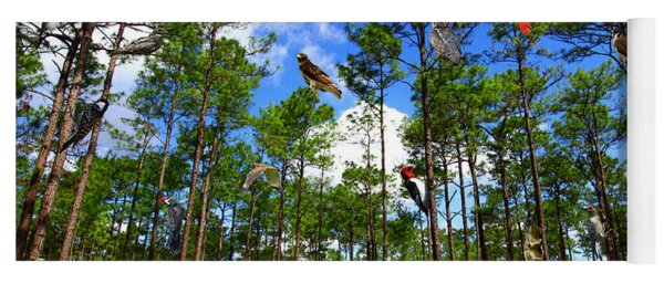 Withlacoochee State Forest Nature Collage Yoga Mat
