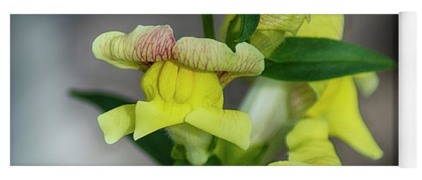 Wonderful Nature - Yellow Antirrhinum Yoga Mat
