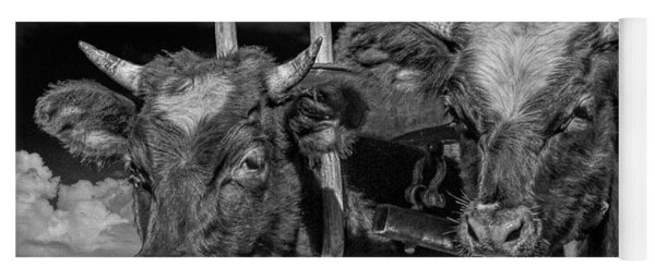 Work Team Of Oxen In Black And White Yoga Mat