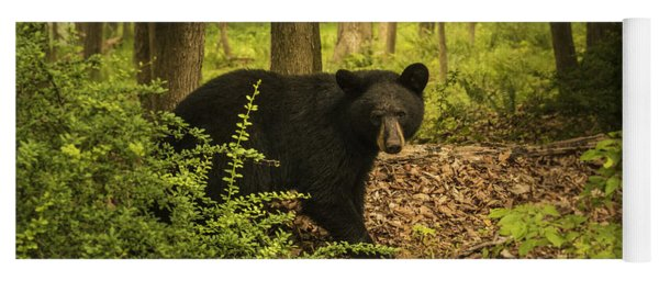 Yearling Black Bear Yoga Mat
