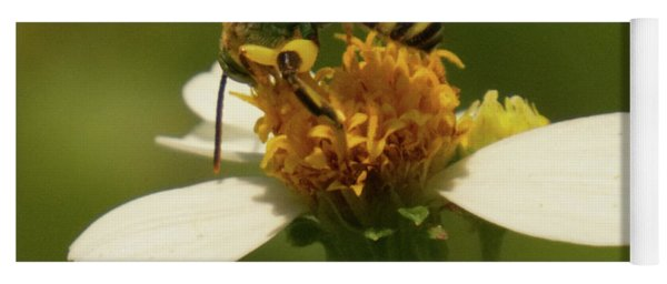 Yellow And Black Bee On Flower. Yoga Mat