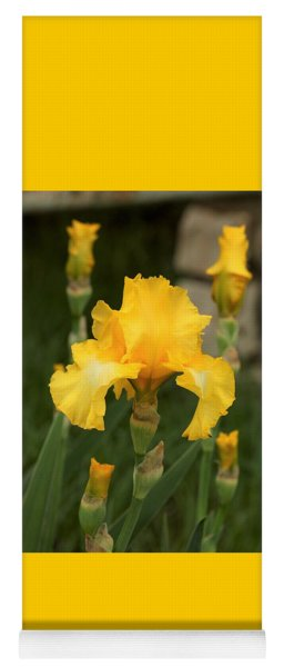 Yellow Bearded Iris And Buds Yoga Mat