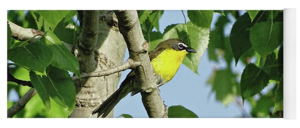 Yellow-breasted Chat Yoga Mat