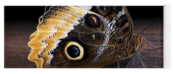 Yellow-edged Giant Owl Butterfly Yoga Mat