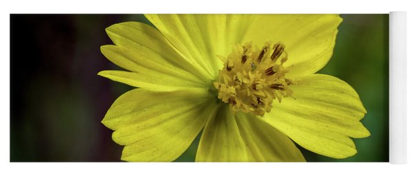 Yoga Mat featuring the photograph Yellow Flower by Ed Clark