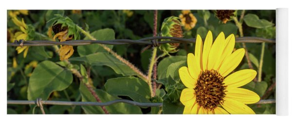 Yellow Flower Escaping From A Barb Wire Fence Yoga Mat
