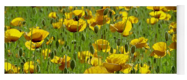 Yellow Poppy Field Yoga Mat