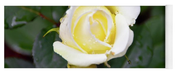 Yellow Rose 1 Yoga Mat