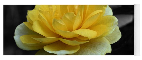 Yellow Rose In Bloom Yoga Mat