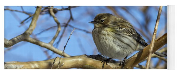 Yellow-rumped Warbler Perched Yoga Mat