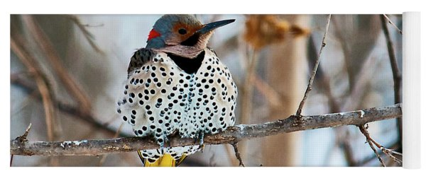 Yellow-shafted Northern Flicker Staying Warm Yoga Mat