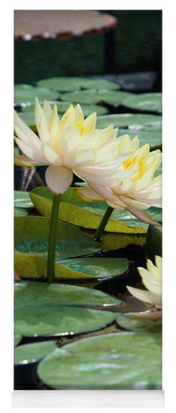 Yellow Water Lillies - Longwood Gardens Yoga Mat
