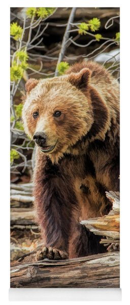 Yoga Mat featuring the painting Yellowstone Grizzly Bear by Christopher Arndt