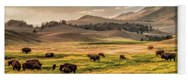 Yoga Mat featuring the painting Yellowstone National Park Lamar Valley Bison Grazing by Christopher Arndt