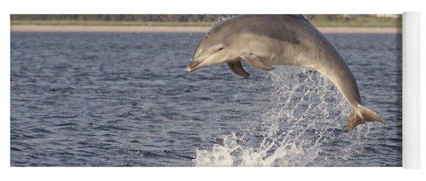 Young Bottlenose Dolphin - Scotland #13 Yoga Mat