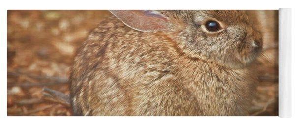 Young Cottontail In The Morning Yoga Mat