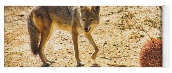 Young Coyote And Cactus Yoga Mat