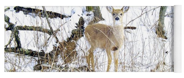 Young Doe And Spring Snow Yoga Mat