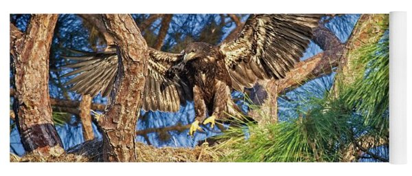 Young Eagle On Nest Yoga Mat