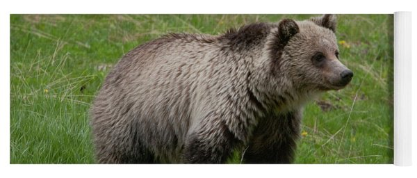 Young Grizzly Yoga Mat