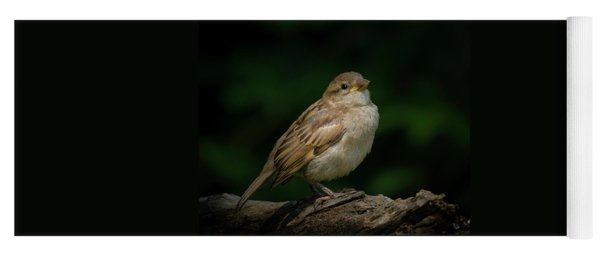 Young House Sparrow Yoga Mat