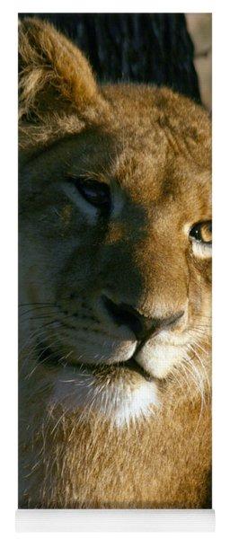 Young Lion Yoga Mat