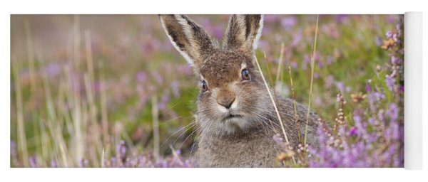 Young Mountain Hare In Purple Heather Yoga Mat