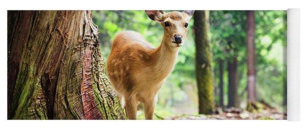 Young Sika Deer In Nara Park Yoga Mat