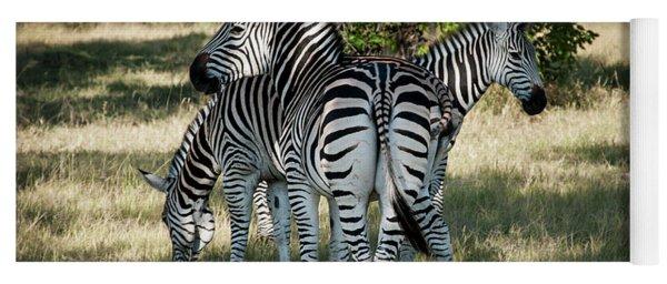 Three Zebras Yoga Mat