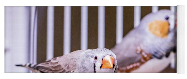Zebra Finch Pair Yoga Mat