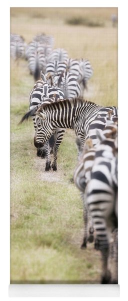 Zebra Migration In  The Masai Mara Yoga Mat