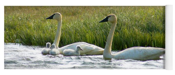 Arctic Tundra Swans And Cygnets Yoga Mat