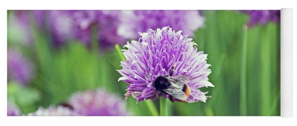 Chorley. Picnic In The Park. Bee In The Chives. Yoga Mat