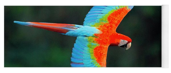 Close Up Of Flying Red-and-green Macaw Yoga Mat