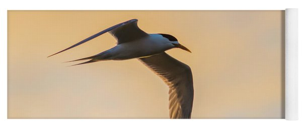 Crested Tern In The Early Morning Light Yoga Mat