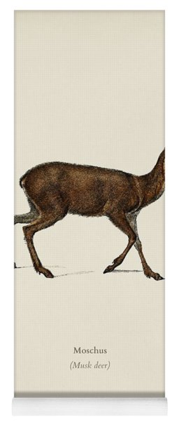 Moschus Illustrated By Charles Dessalines D  Orbigny  1806 1876  Yoga Mat