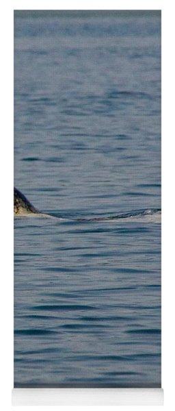 Pacific Harbor Seal Yoga Mat
