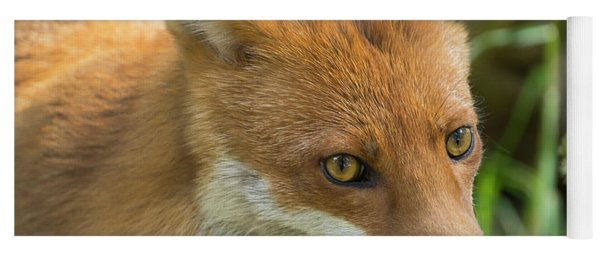 Red Fox Yoga Mat