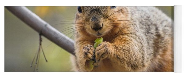 Snacking Squirrel Yoga Mat