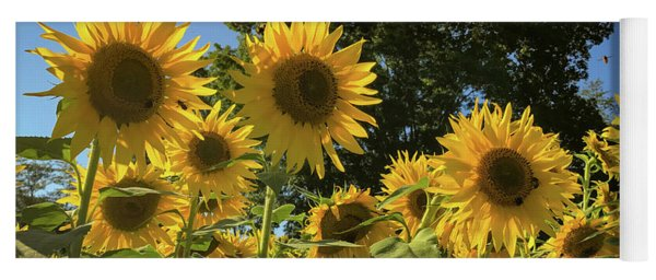 Sunlit Sunflowers Yoga Mat