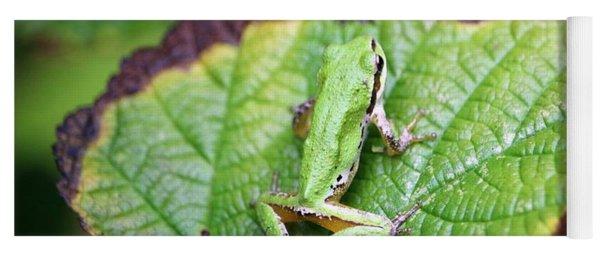 Tree Frog On Leaf Yoga Mat
