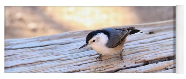 White Breasted Nuthatch Yoga Mat